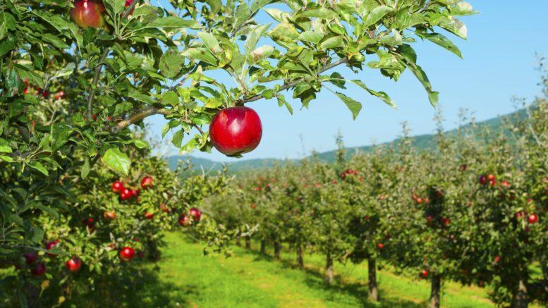 Il mainstreaming degli investimenti alternativi e degli investimenti sui terreni agricoli